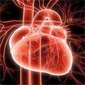 VI съезд Российского научного общества интервенционных кардиоангиологов