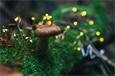 Употребление в пищу грибов помогло в профилактике рака простаты