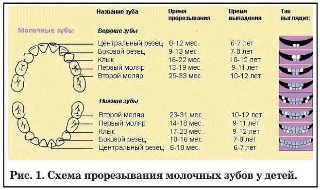 город: Санкт-Петербург какая бывает температура у деток когда режутся зубы поверх
