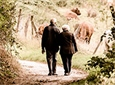 Чтобы стать долгожителем, нужно ходить максимально быстро