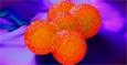 Тикагрелор - новый антибиотик?