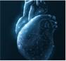 Оглядываясь назад и думая о будущем — 15 лет исследований в области кардиологии и сердечно-сосудистой системы. Часть 1