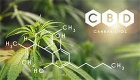 Cbd наркология тагил наркомания