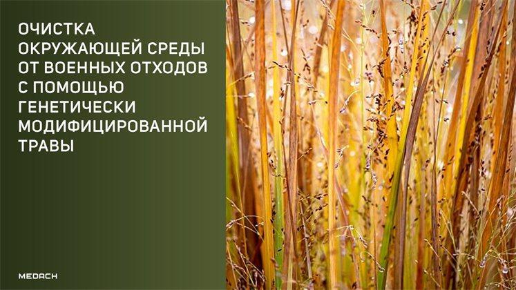 Очистка окружающей среды от военных отходов с помощью генетически модифицированной травы