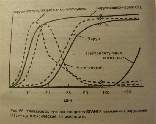 Иммунологический механизм противовирусной защиты.