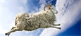 Злой критик: Вакцинный алюминий в овечьей шкуре